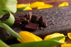 Pieces of dark chocolate on a decorative board surrounded by yellow tulips. stock image