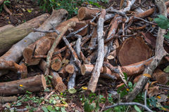 Pieces of dead wood. In the jungle stock photography