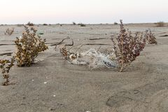 Pieces of fishing net between two bushes on beach royalty free stock images