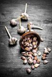 Pieces of fresh garlic in a wooden bowl. On a black chalkboard Royalty Free Stock Photography