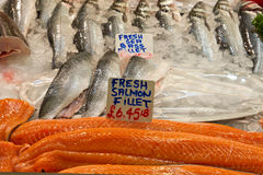 Pieces of Fresh salmon and other fish. Many pieces of Fresh salmon and sea bass on ice royalty free stock photography