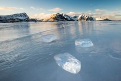 Pieces of ice on the frozen Haukland beach. In Lofoten, Norway at sunrise royalty free stock image