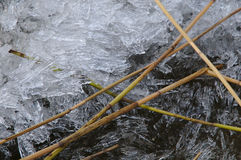 Pieces of ice and reads Royalty Free Stock Photo