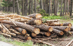 Free Pieces Of Wood Royalty Free Stock Photos - 57926808