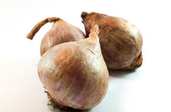 3 pieces of Onion. Fresh onion from market. Good foor cooking royalty free stock images