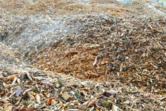 Pieces of pine tree chips burned to generate heat for district h Royalty Free Stock Photography