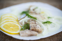 Pieces of salted herring with onions Stock Photos