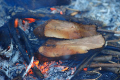 Pieces of smoked bacon being cooked on bonfire Royalty Free Stock Image