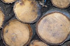 Pieces of split firewood. Front view of pieces of split firewood. Firewood is any wooden material it can be seasoned dry or unseasoned fresh/wet Stock Images