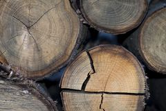 Pieces of split firewood. Front view of pieces of split firewood. Firewood is any wooden material it can be seasoned dry or unseasoned fresh/wet Stock Photo
