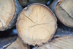 Pieces of split firewood. Front view of pieces of split firewood. Firewood is any wooden material it can be seasoned dry or unseasoned fresh/wet Stock Photos