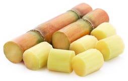 Pieces of sugarcane Royalty Free Stock Photo
