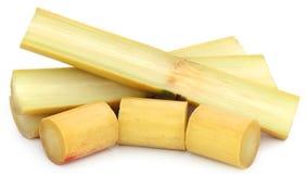 Pieces of sugarcane Stock Photos