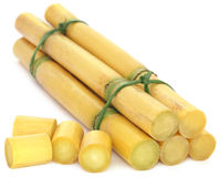 Pieces of sugarcane Stock Photography