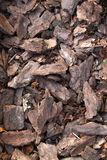 The pieces of tree bark. Texture like for background Stock Image