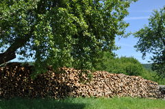 Pieces of wood in the nature. Pieces of firewood in the naure with blue sky and some trees royalty free stock photo