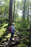 Piechur na krokach, footpath przez las halizny obraz royalty free