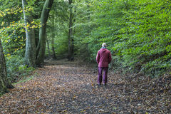 Piechur na las ścieżce przy stokrotka kącika kraju parkiem Zdjęcia Stock