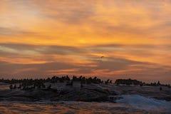 Pieczętuje sylwetkę przeciw wschodowi słońca w foki wyspie Zdjęcia Royalty Free