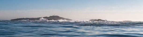 Pieczętuje wyspę w middla Fałszywa zatoka Obrazy Royalty Free