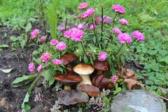 Pieczarek i kwiatów jesieni żniwa bielu pieczarka fotografia stock
