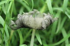 Pieczarka, grzyb w trawie obraz stock