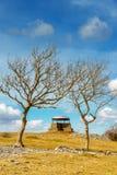 Pieczarka na Skautowskiej bliźnie, Kendal, obramiający dwa popiółów drzewami Zdjęcia Stock