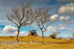 Pieczarka na Skautowskiej bliźnie, Kendal, obramiający popiółów drzewami Zdjęcie Stock
