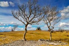 Pieczarka na Skautowskiej bliźnie, Kendal, obramiający popiółów drzewami Obraz Royalty Free