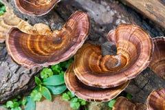 Pieczarka od szczątki W wilgotny lasowy Łatwym widzieć Niektóre typ pieczarki i niektóre no są Zdjęcie Royalty Free