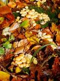 Pieczarki i liście w jesieni fotografia stock