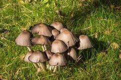 Pieczarki na pogodnym jesień dniu Zdjęcie Royalty Free