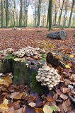 Pieczarki r na drzewnym bagażniku w jesieni zdjęcie royalty free