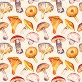 Pieczarki rozmaitości wzór na miękkim sepiowym tle Obraz Royalty Free
