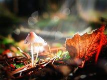 Pieczarki w jesień lesie nastrój jesień Obrazy Royalty Free