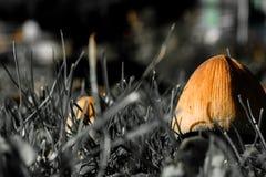 Pieczarki w trawie w brudno- colours fotografia royalty free