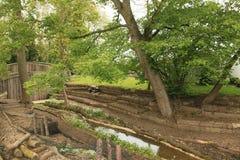 pieczarkowa plantacja Obraz Royalty Free