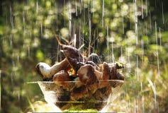 Pieczarkowy deszcz moczy talerza z pieczarkami Obraz Stock