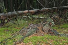 Pieczarkowy las Obrazy Stock