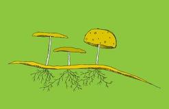 pieczarkowych korzeni glebowy tercet Obraz Royalty Free