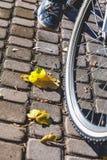 Pied dans des espadrilles sur le pont d'automne de pédale de bicyclette Image stock