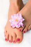 Pied de femme avec le chrysanthemum de fleur Photos stock