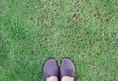 Pied de femme dans des chaussures brunes sur l'herbe verte Images libres de droits