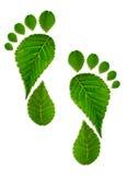 Pied de trace des feuilles Image stock