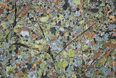 Pied mossy pattern on the arctic rock Stock Photo