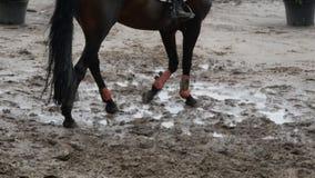 Piede del cavallo che cammina sul fango Chiuda su delle gambe che camminano calciando la terra fangosa bagnata stock footage