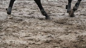 Piede del cavallo che cammina sul fango Chiuda su delle gambe che camminano calciando la terra fangosa bagnata Movimento lento video d archivio
