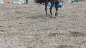 Piede del cavallo che cammina sulla sabbia Chiuda su delle gambe che vanno sulla terra al manege all'azienda agricola Seguendo pe Fotografie Stock
