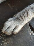 Piede di /Big del gatto del bambino il gatto/gatto di amore fotografie stock libere da diritti