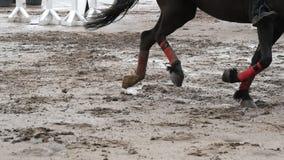 Piede di funzionamento del cavallo sul fango Chiuda su delle gambe che galoppano sulla terra fangosa bagnata Movimento lento archivi video